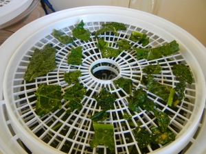 kale chips in dehydrator